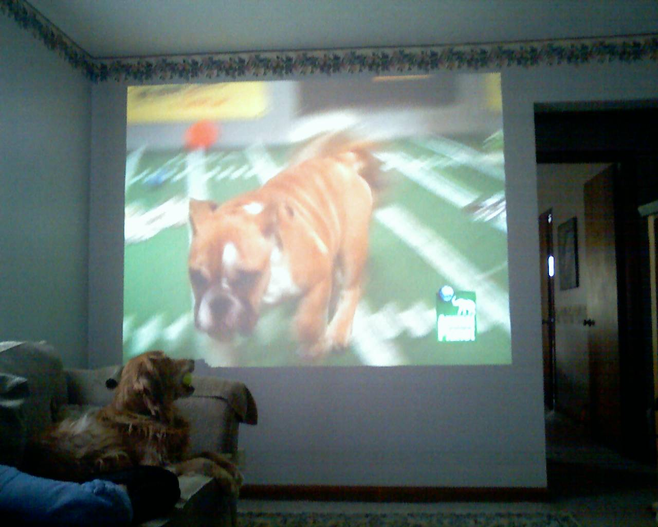 Puppy Bowl III on the big screen