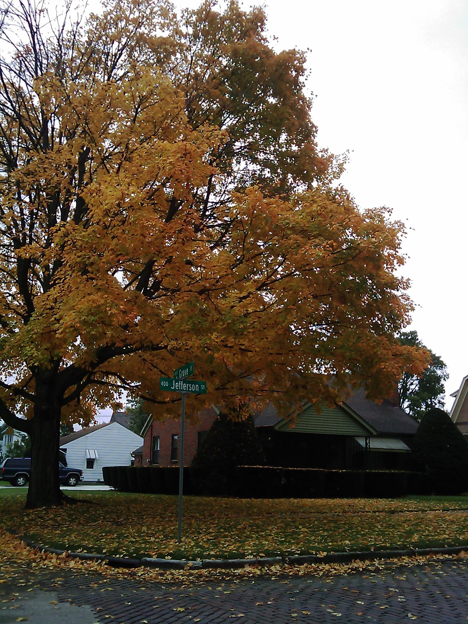 Yup, it\'s that time of year on our street